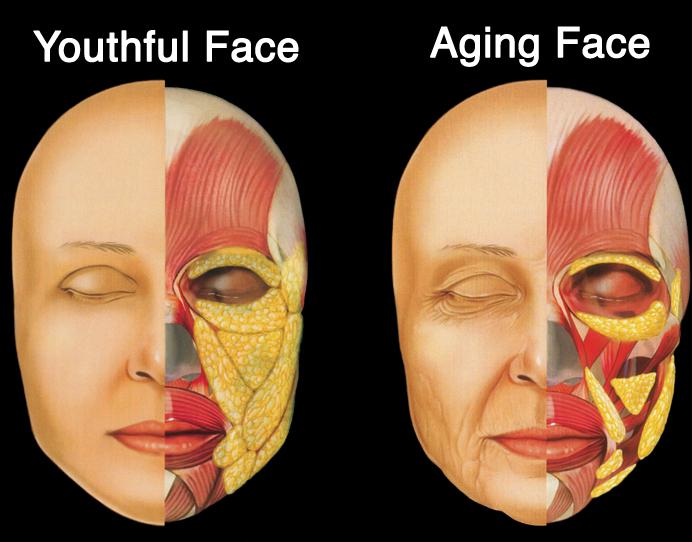 gezicht-acupunctuur en vet veroudering